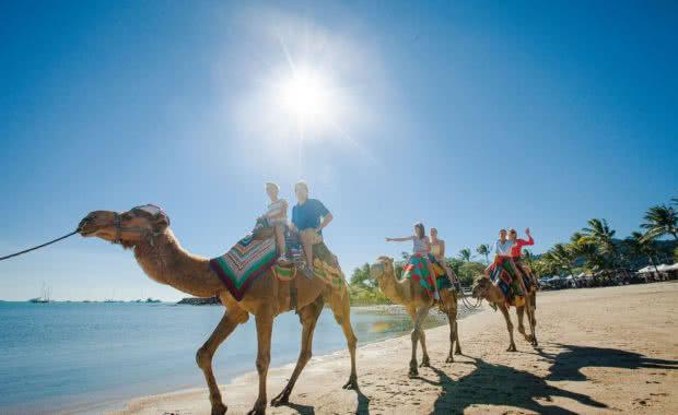 Camel Rides Airlie Beach Markets