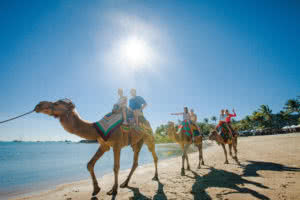 Camel Rides Airlie Beach Foreshore