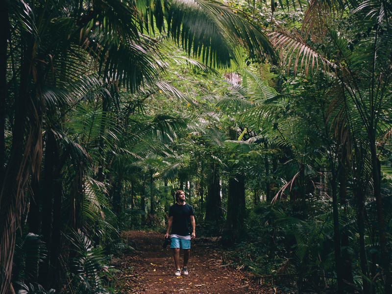 A man hiking a rainforest walking track in the Whitsundays