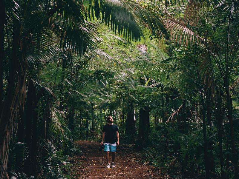 Rainforest walking track