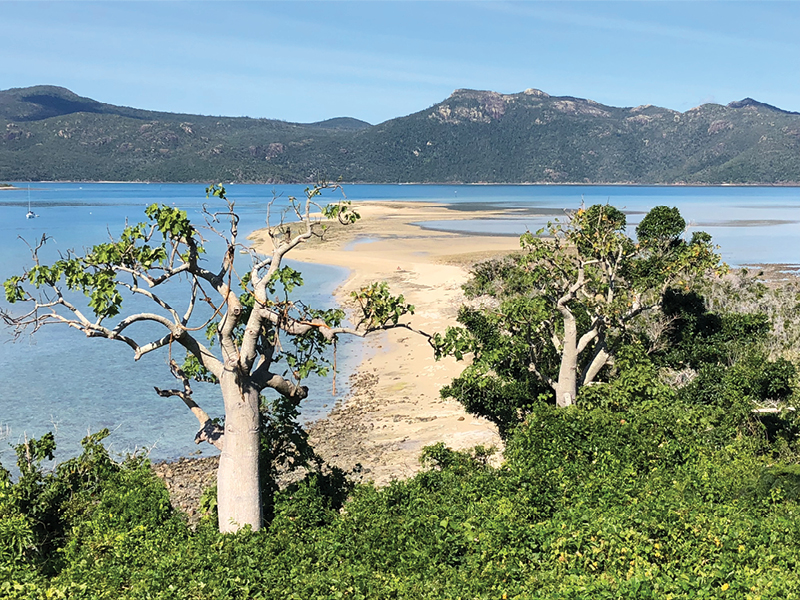 view from Langford Island Lookout over sand spit and bottleneck trees