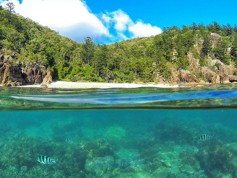 Manta Ray Bay on Hook Island in the Whitsundays with underwater image of reef and fish