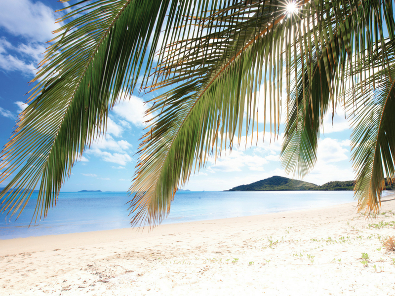 Palm Tree and white beach overlooking Gloucester Island at Hydeaway Bay in the Whitsundays