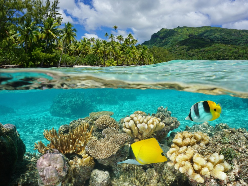 Coral fish and reef shown underwater next to a tropical island