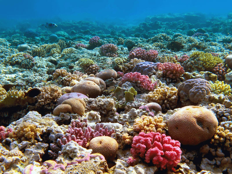 Colourful coral Reef on the Great Barrier Reef