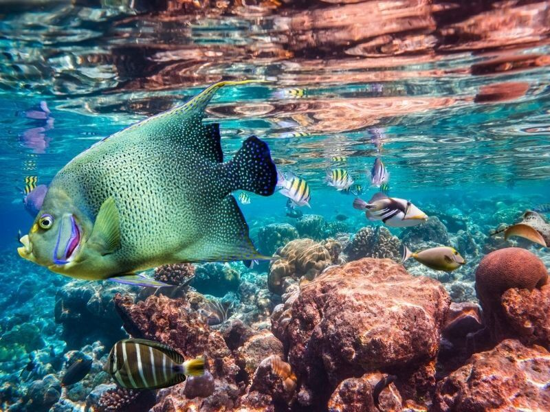 Tropical fish and coral reef on the Great Barrier Reef