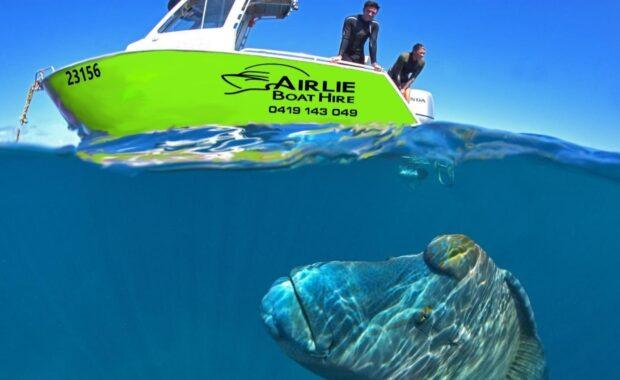 Airlie Beach Boat Hire green motor vessel with tropical maori wrasse fish under the surface