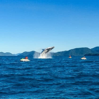 An Epic Whale Moment Witnessed By Whitsunday Jetski Tours