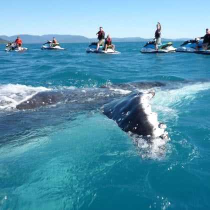 Whitsunday Jetski Tours 'Once in a lifetime' experience